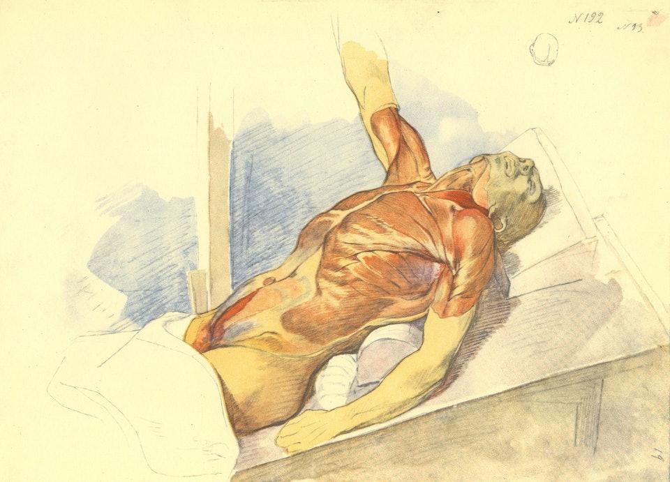 Анатомічний малюнок