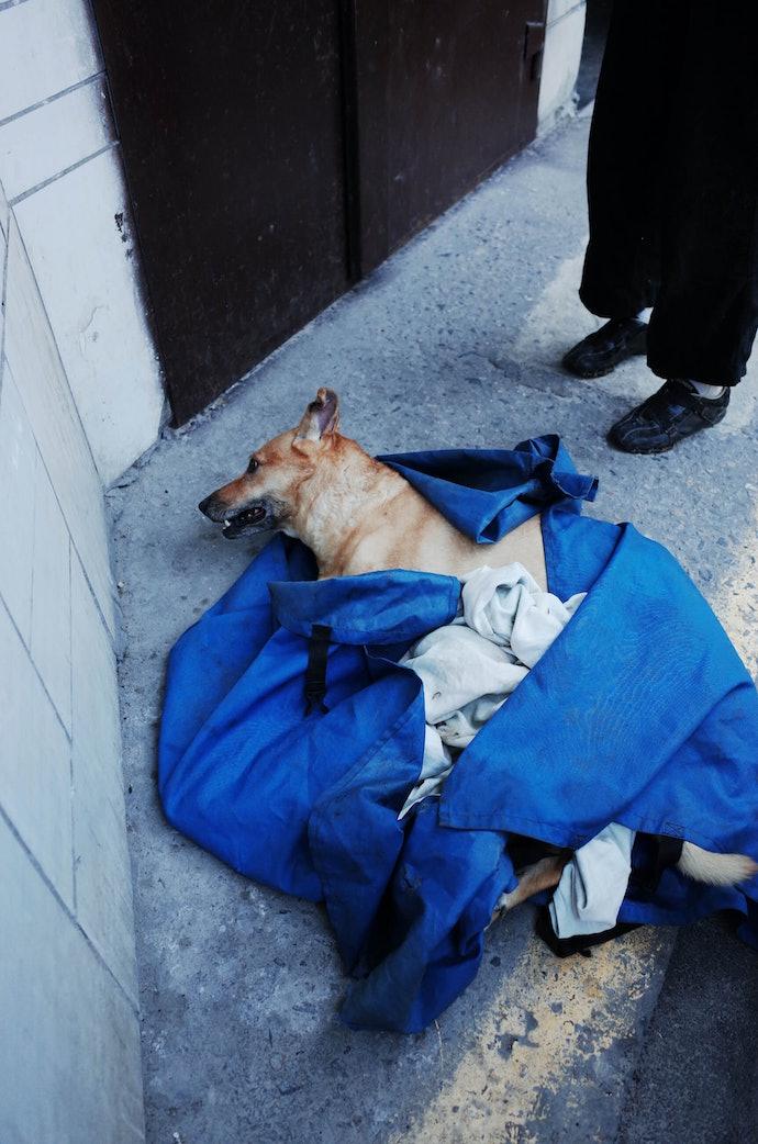 Мішка Бочкарьов Команда порятунку тварин Київ