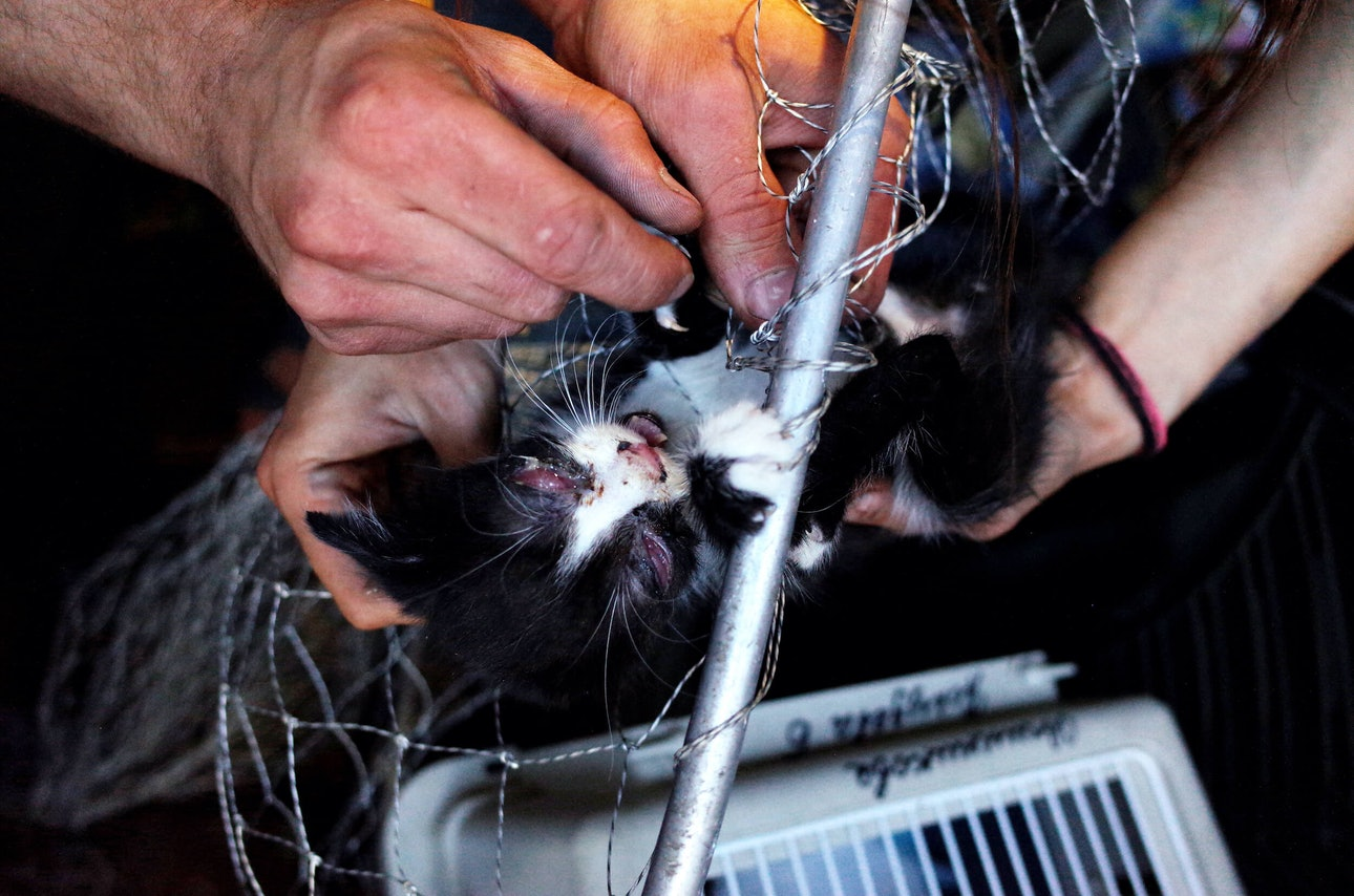 animal_rescue_bochkarev Мишка Бочкарев Спасатели животных Киев