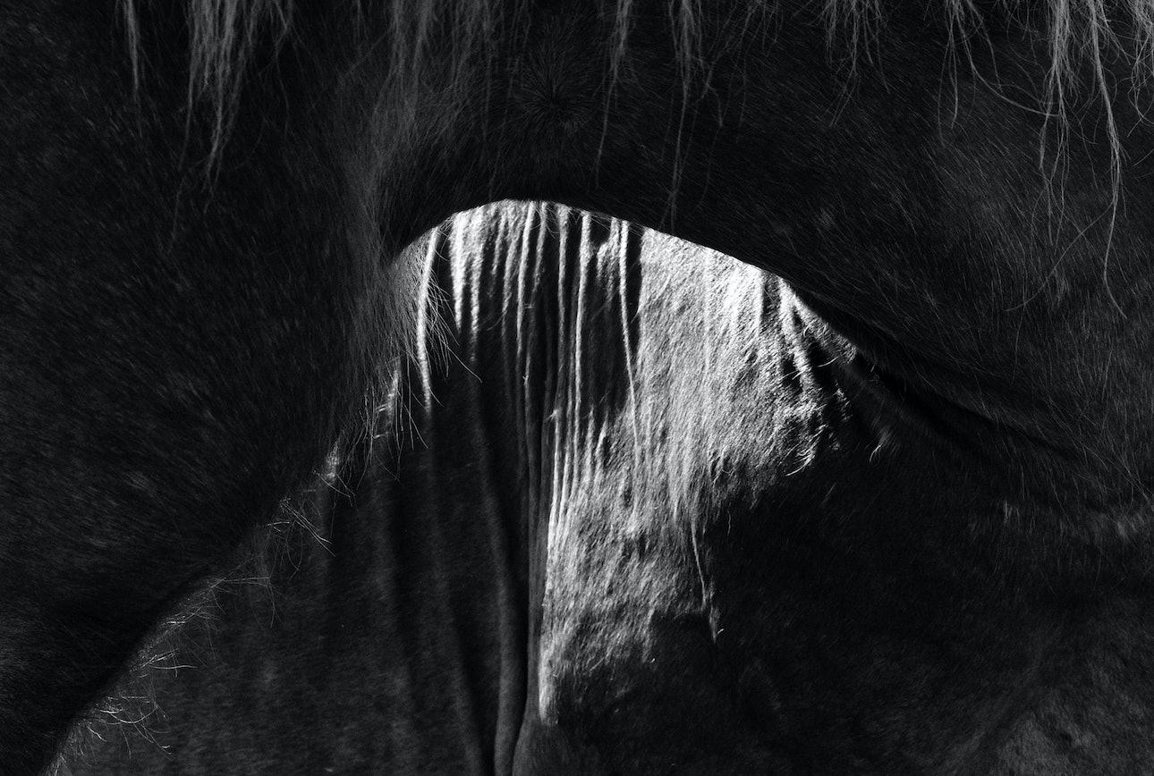 Юрко Дячишин кони
