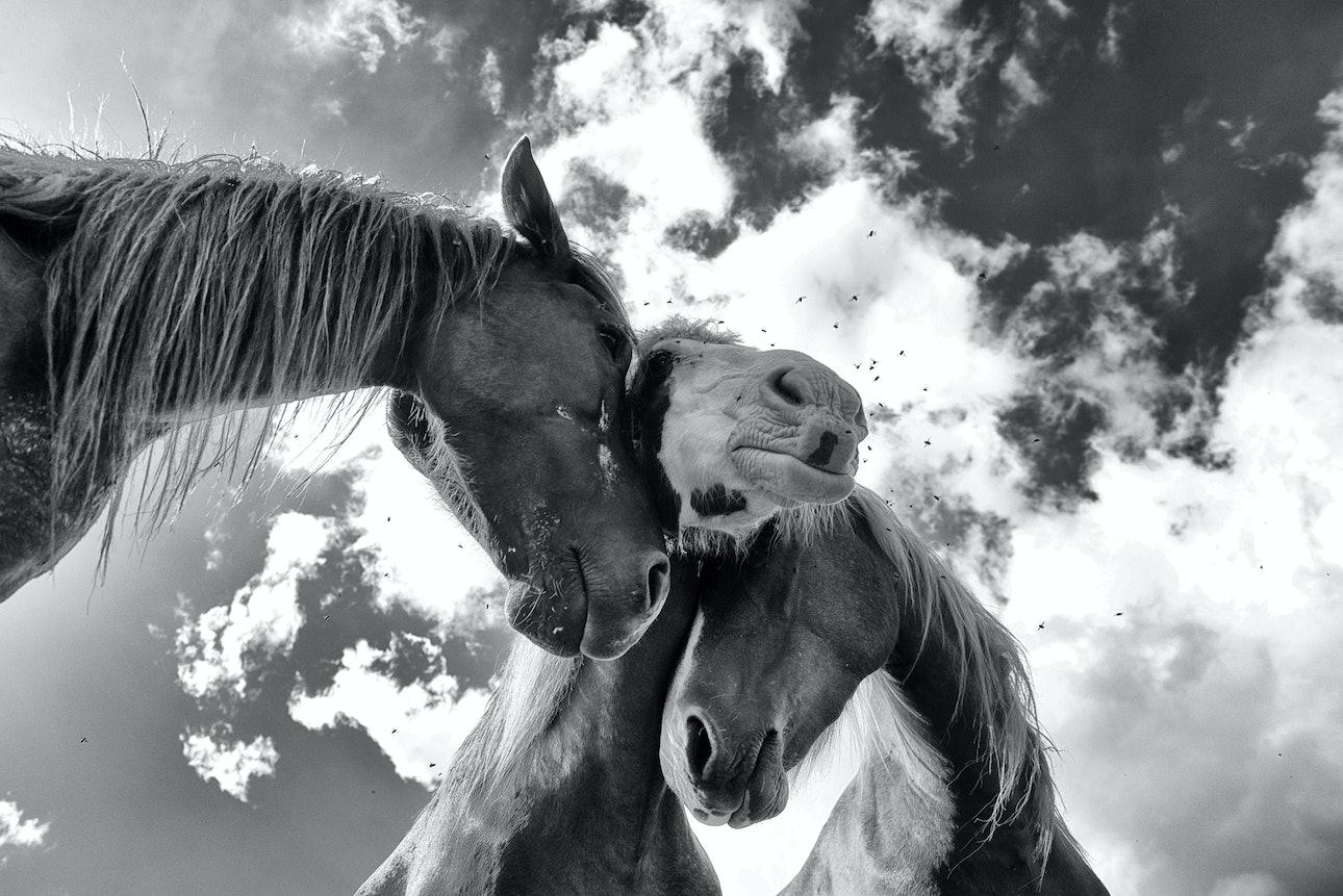 Юрко Дячишин коні